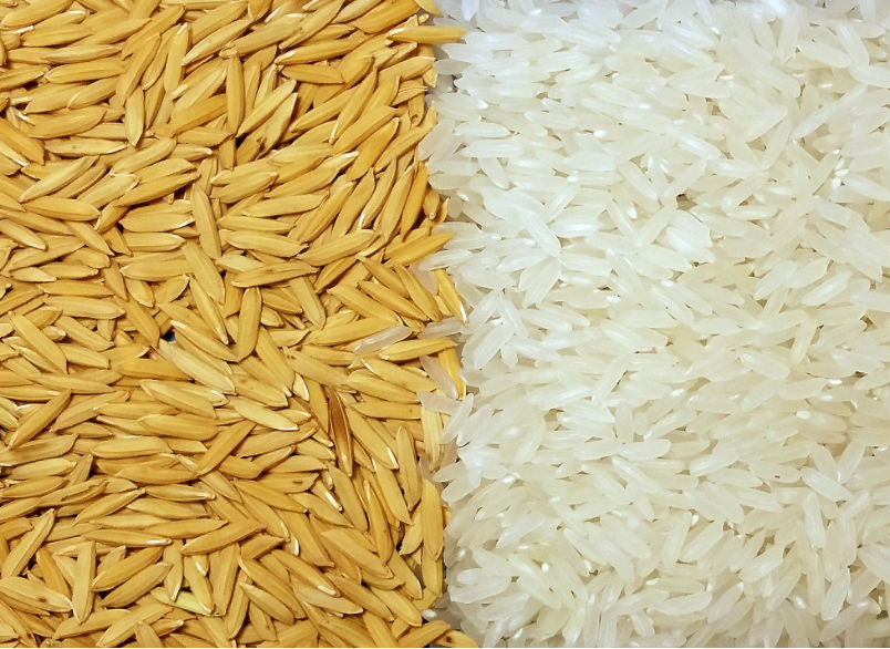 Consumer Protection, Food Safety and Industrial Yield of Rice